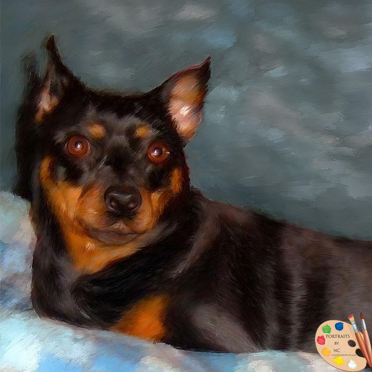 Brown Chihuahua Dog Portrait