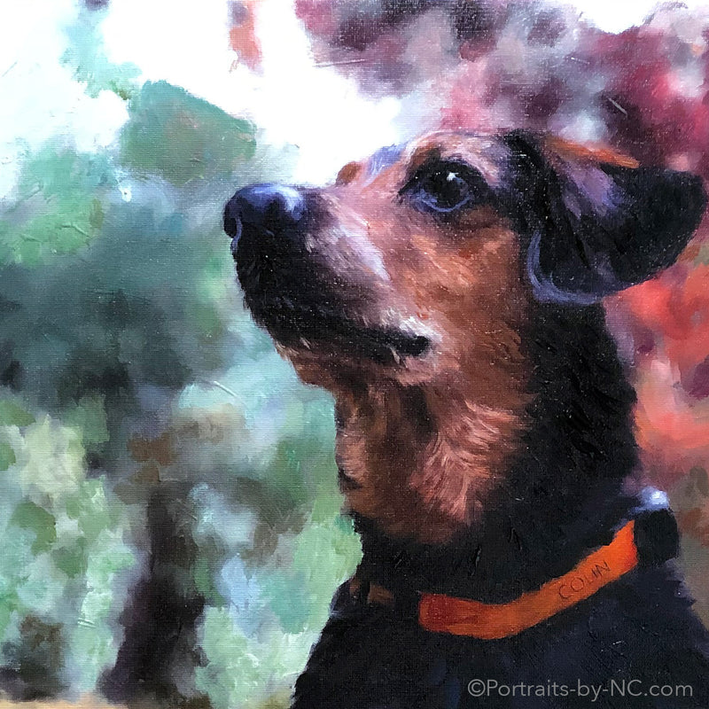 products/Dog-Portrait-Detail-686.jpg