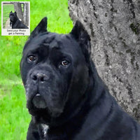 Italian Mastiff Dog Oil Portrait
