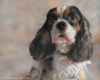 Cavalier King Charles Dog Portrait 669 - Portraits by NC