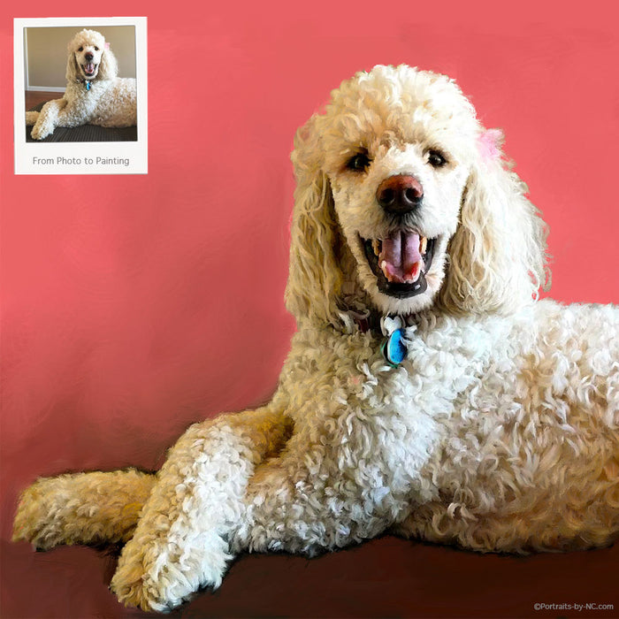 Poodle Portrait From Photo