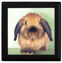 Keepsake/Jewelry Box - Holland Lop Rabbit - Lacquer Box Black Wood