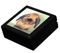 Keepsake/Jewelry Box - Holland Lop Rabbit - Lacquer Box Black