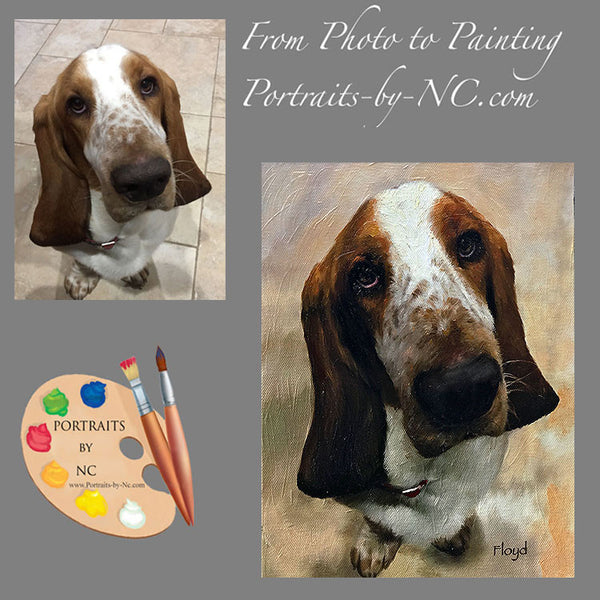 Basset Hound Portrait from Photo