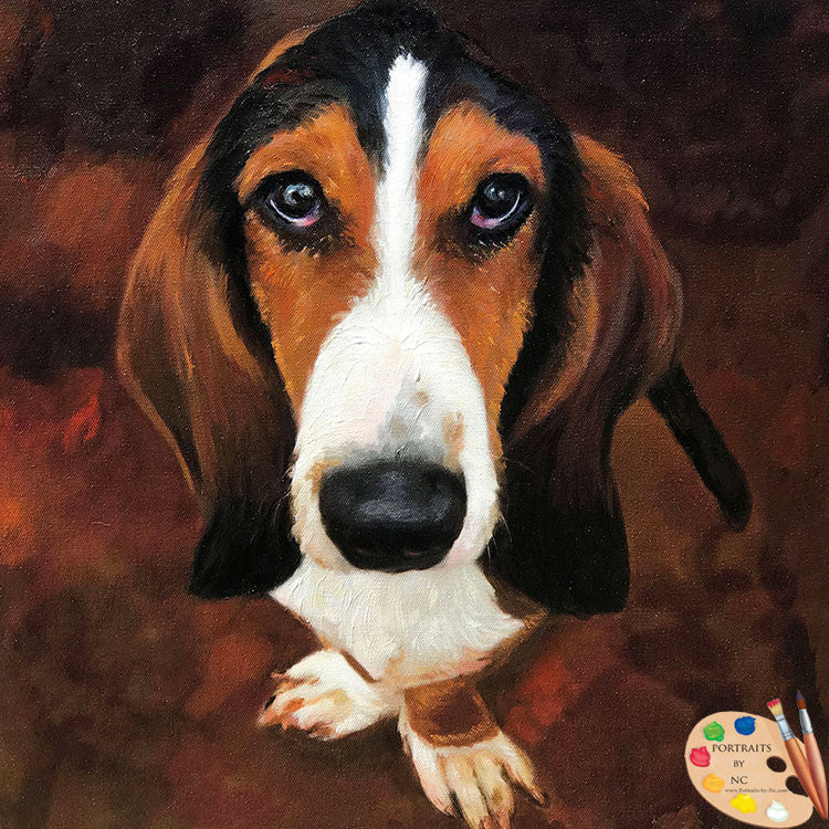 Basset Hound Pet Portrait 570 - Portraits by NC