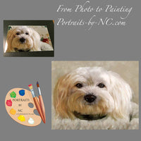 Bichon Frise Dog Portrait from Photo