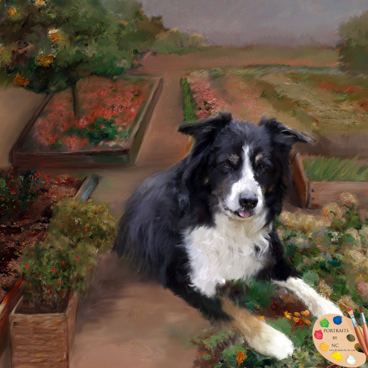 border-collie-in-garden