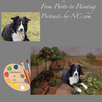 border-collie-portrait-from-photo