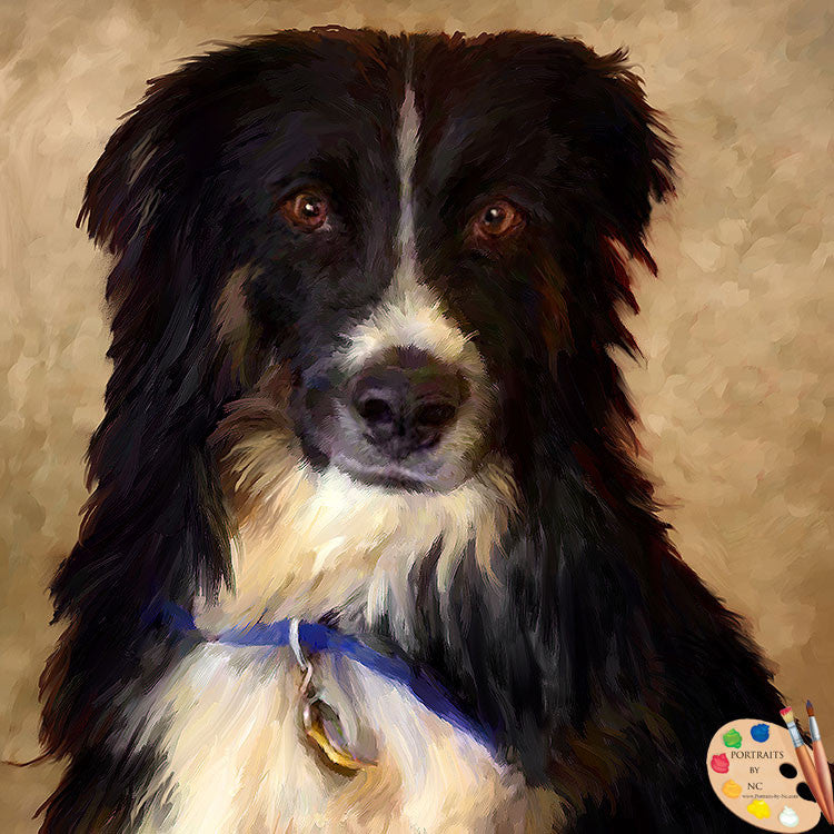products/border-collie-portrait-508.jpg