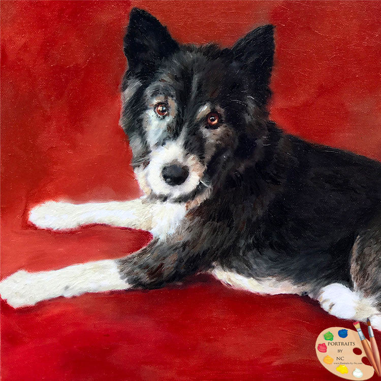 Custom Border Collie Dog Portrait