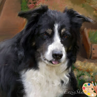 border-collie-portraits