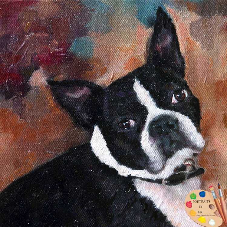 Boston Terrier  Dog Portrait 527 - Portraits by NC