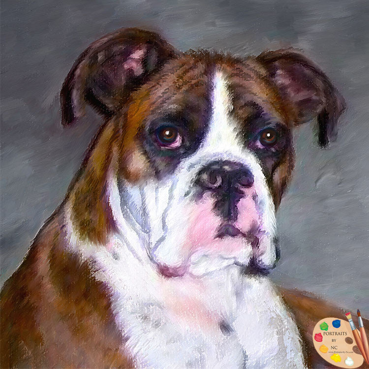 Brown Boxer Dog Portrait