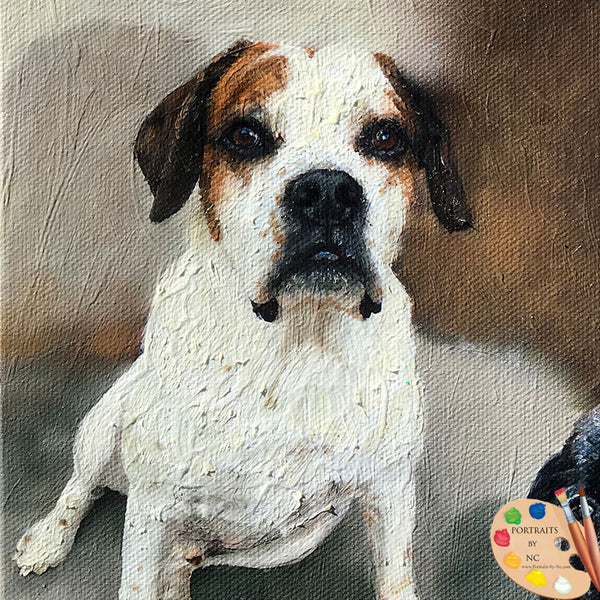 Boxer Mix Dog Portrait