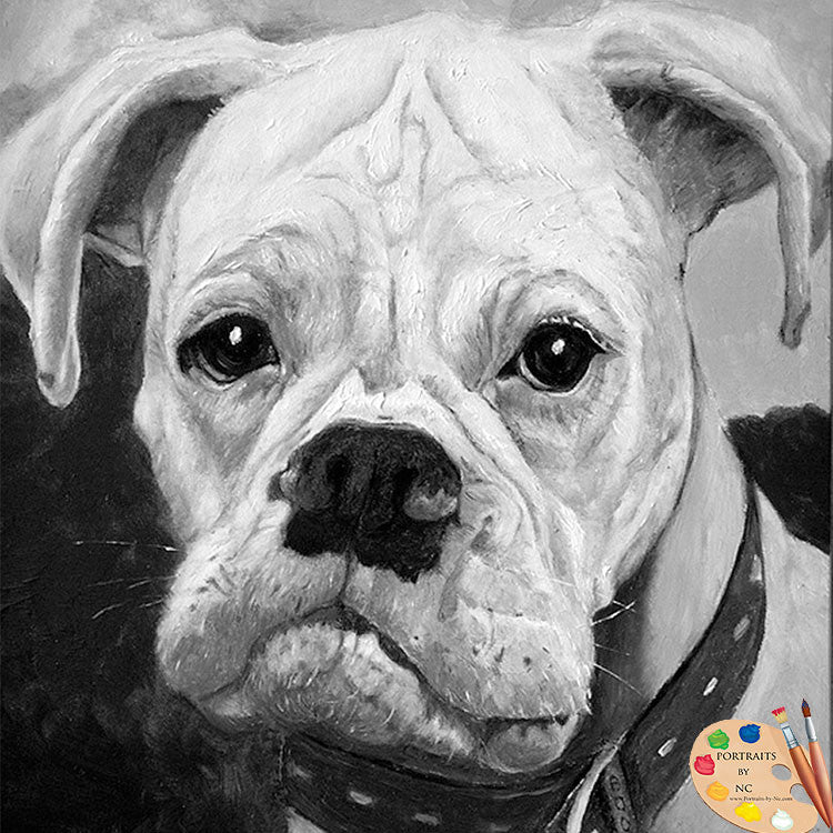 products/boxer-portrait-79_2.jpg