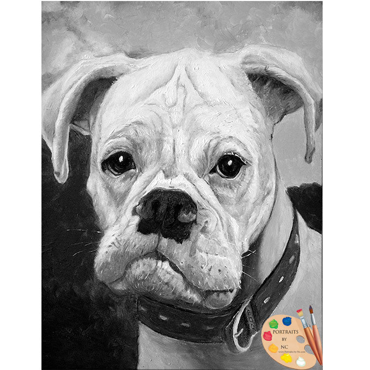 products/boxer-portrait-79.jpg