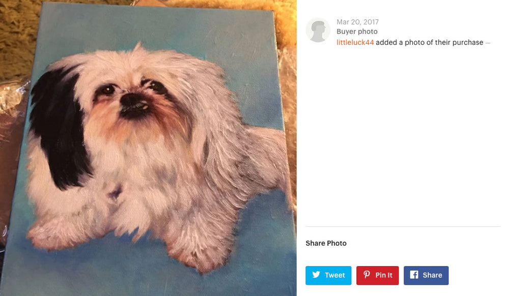 Shih Tzu Buyer Photo