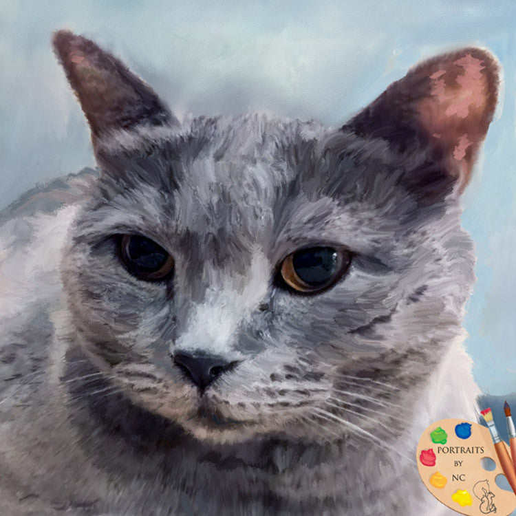 Grey British Shorthair Cat Portrait