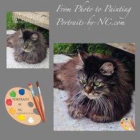 Maine Coon Cat Portrait 479 - Portraits by NC