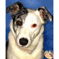 Catahoula Dog Portrait 441 - Portraits by NC