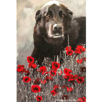 Chocolate Labrador in Poppy Flower Field Dog Portrait