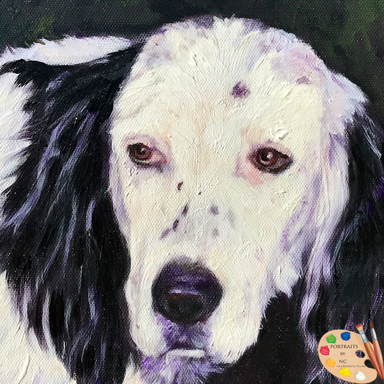Black and White Cocker Spaniel Dog Portrait