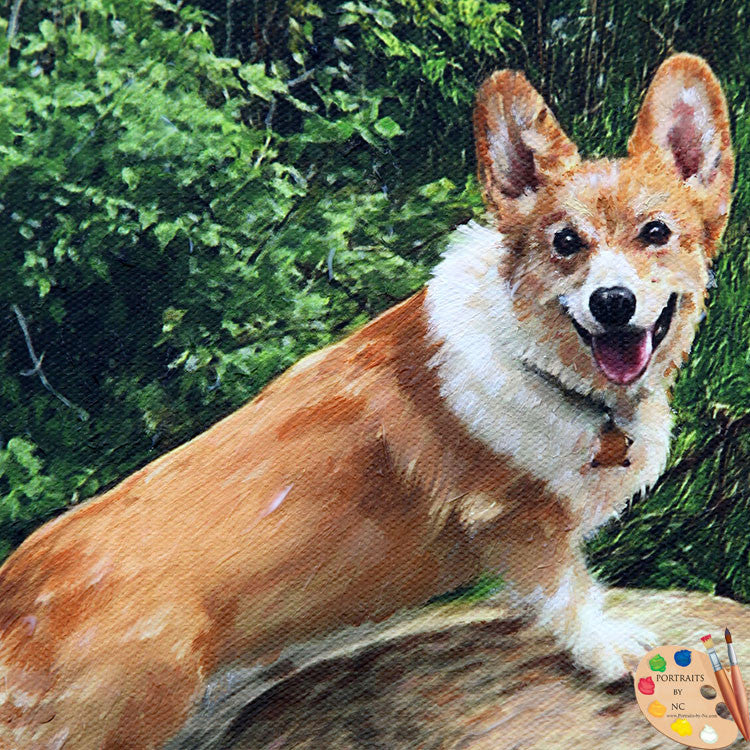 Corgi Pet Portrait