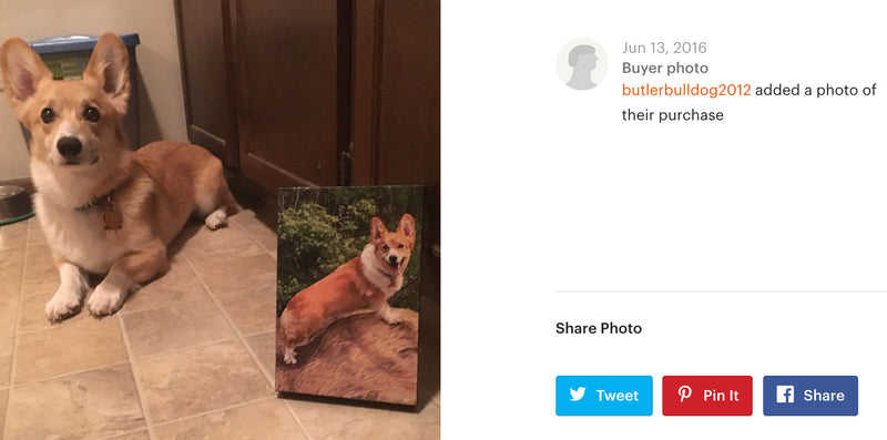 products/corgi.jpg