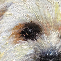 Shih Tzu Eye Detail