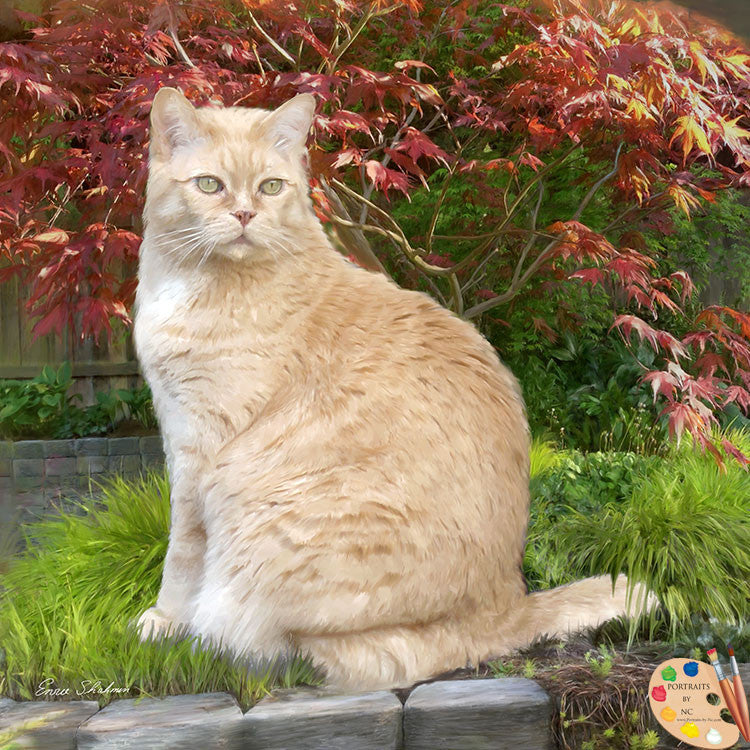 Tabby Cat Portrait Garden Cat 285