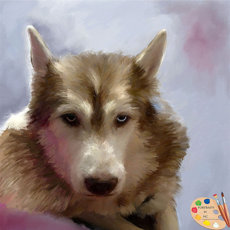 German Shepherd Dog Portrait 573