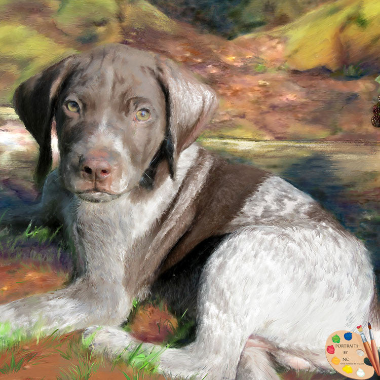 German Shorthair Dog Portrait 252