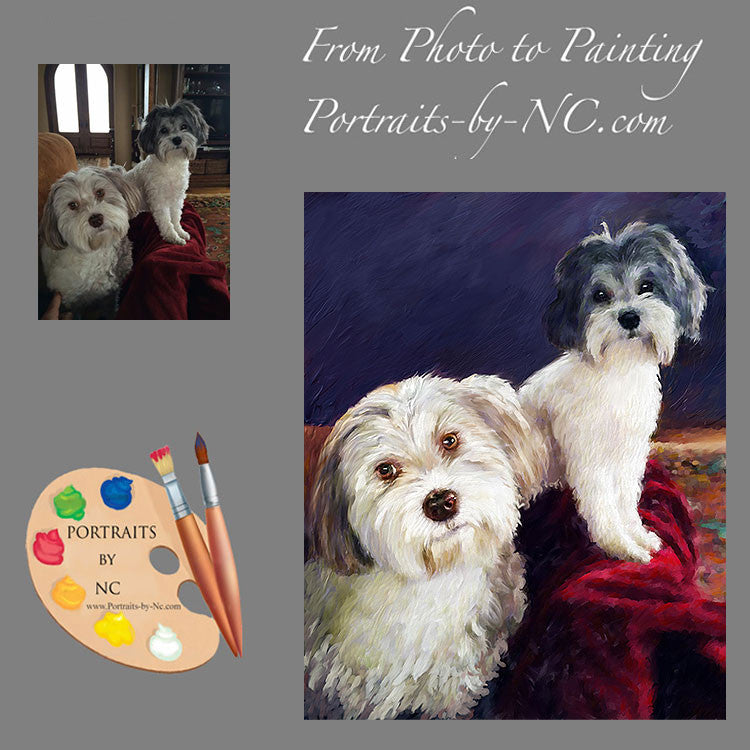 Havanese Dog Portrait from Photo 406