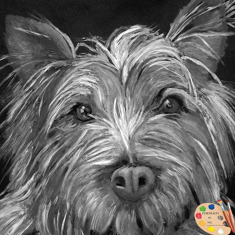 products/highland-terrier-portrait-74_2.jpg