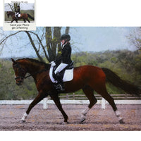 Dutch Warmblood Horse Portrait - Dressage Horse and Rider Portrait