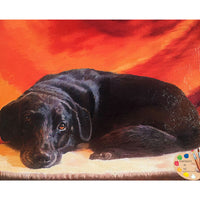 Black Labrador Portrait 439 - Portraits by NC