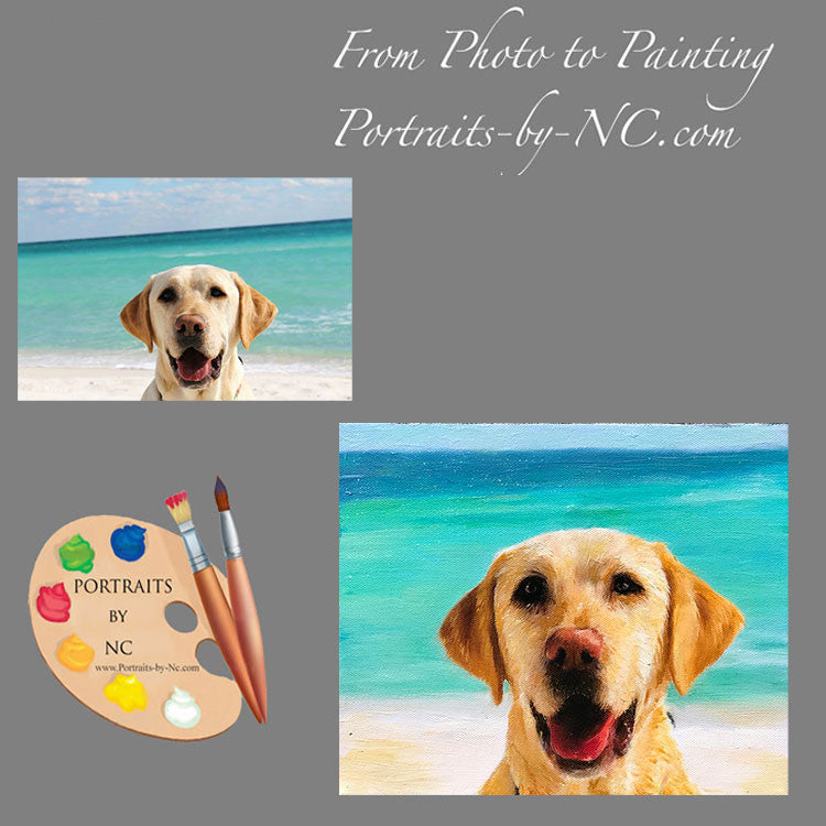 Labrador Portraits From Photo