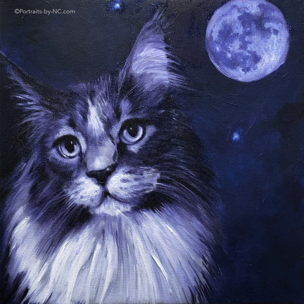 Portrait of a Maine Coon Cat