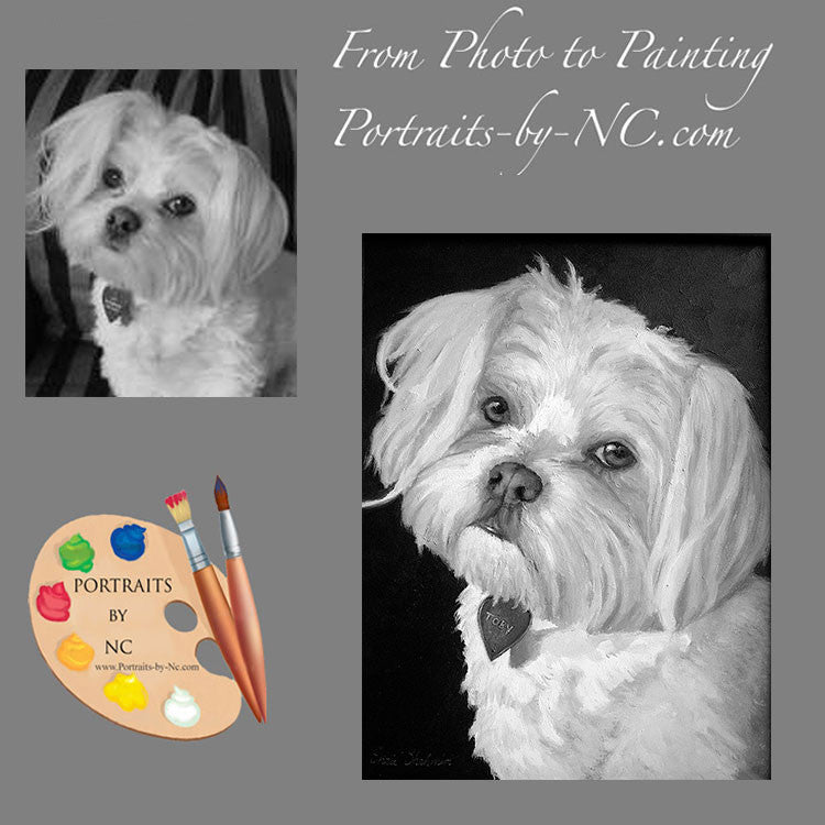 Maltese Pet Portrait 85 - Portraits by NC
