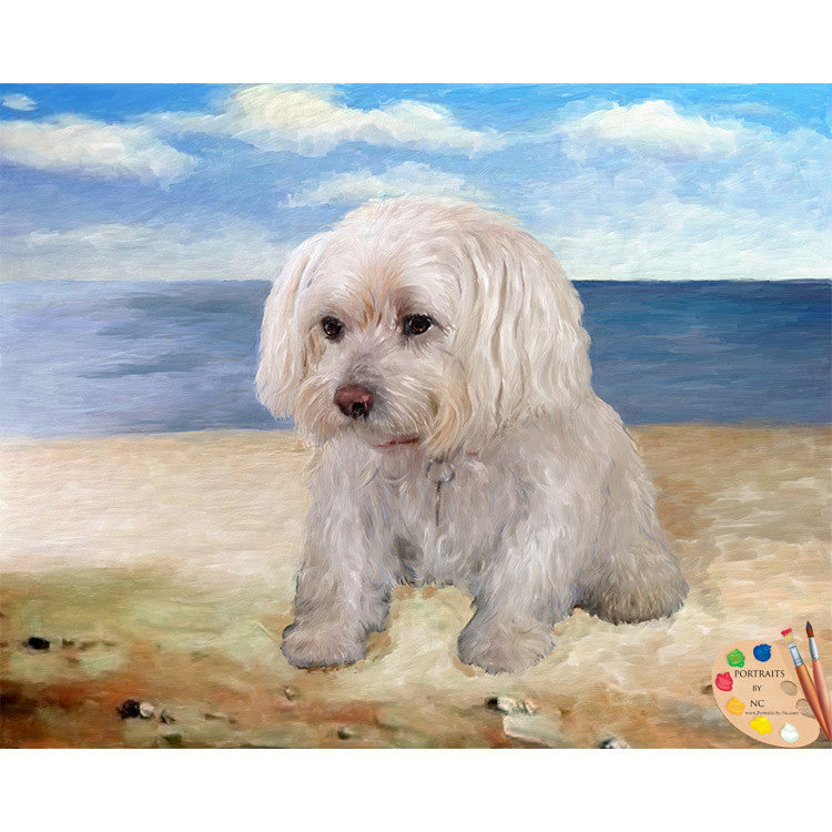 Maltese Dog Portrait 319 - Portraits by NC