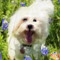 Maltese Dog Portrait 463 - Portraits by NC