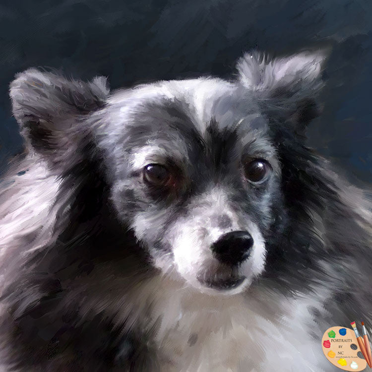 Papillion Dog Portrait 284