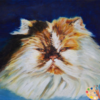 Persian Cat Portrait 187