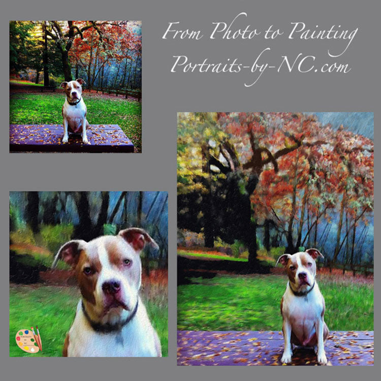 Pit Bull Dog Portrait from Photo 348