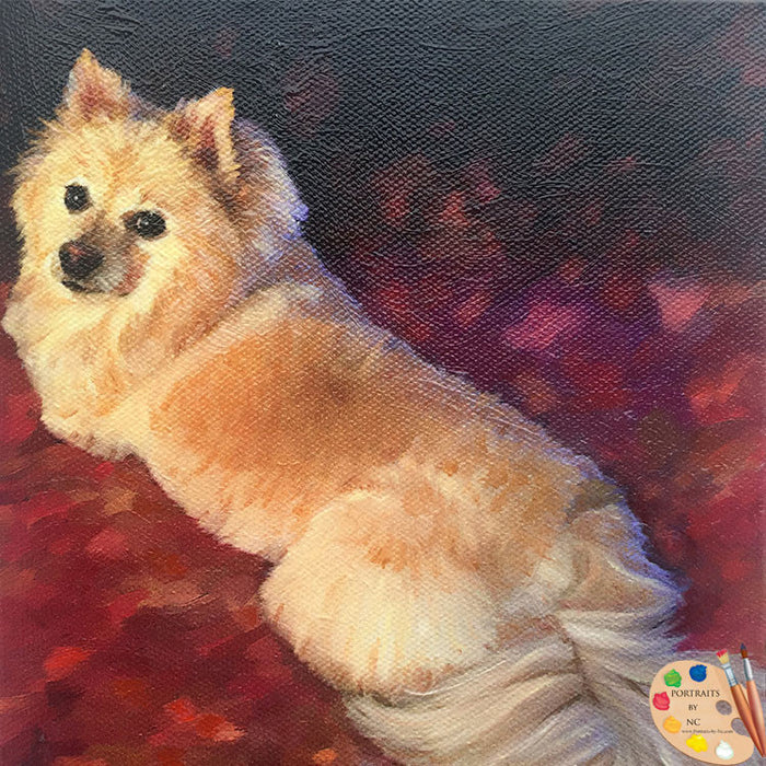 Pomeranian Dog Portrait 496