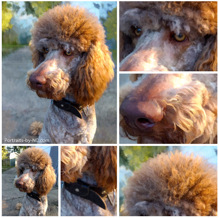 products/poodle-collage.jpg