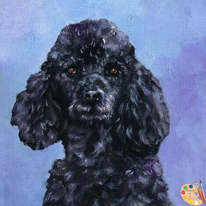 Black Poodle Dog Portrait 531 - Portraits by NC