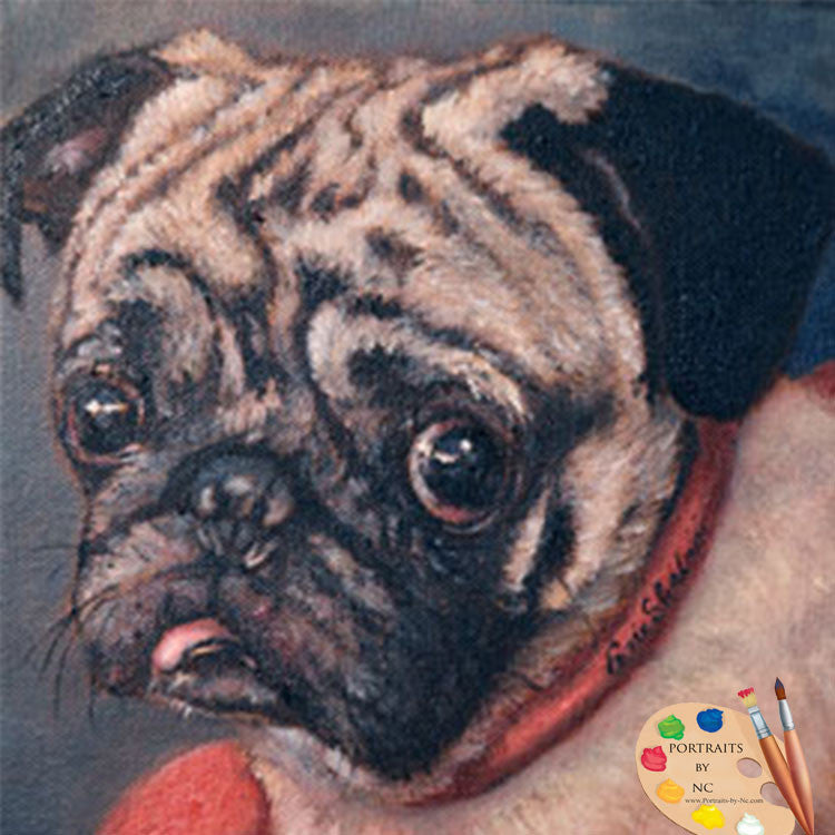 Pug Dog Portrait Pugsy 131