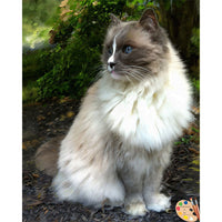 Ragdoll Cat Painting 367