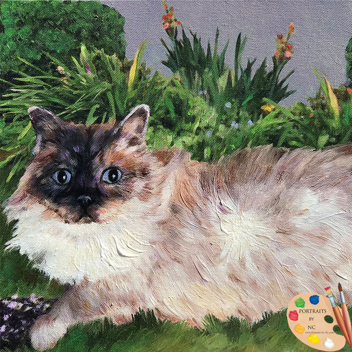 Ragdoll Cat Portrait 528